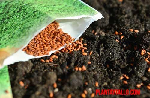 porque las semillas no necesitan luz para germinar