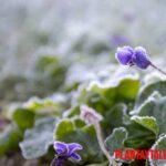 Cuidados del jardín en invierno y pasar los meses de frío
