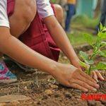 ¿Existen personas con buena mano para las plantas? ¿Tiene alguna explicación?