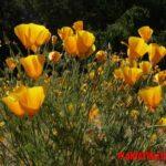 5 flores que atraen abejas que deberías plantar para ayudarlas a polinizar