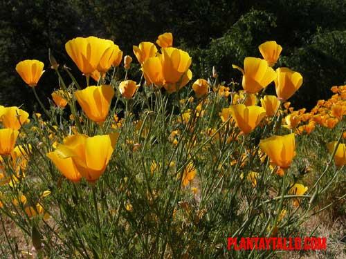 flores que atraen abejas