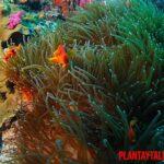 ¿Las algas son plantas? ¿Se conoce el origen de las algas?