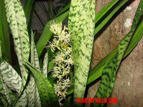 plantas para eliminar malos olores