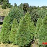 5 plantas características de la navidad