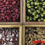 Banco de semillas: que es y porque nuestro futuro podría depender de ellos