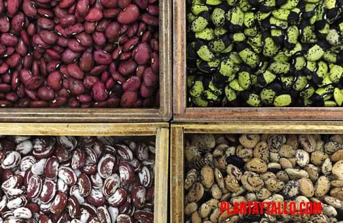 Un banco de semillas es proteger plantas de cara al futuro.