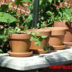 Ventajas y desventajas de usar macetas de barro para sembrar tus plantas