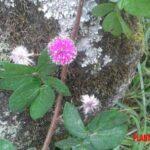 Que son las plantas invasoras, como acabar con ellas y algunos ejemplos