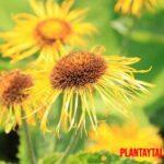 Que son las plantas de ornato, como se clasifican y ejemplos