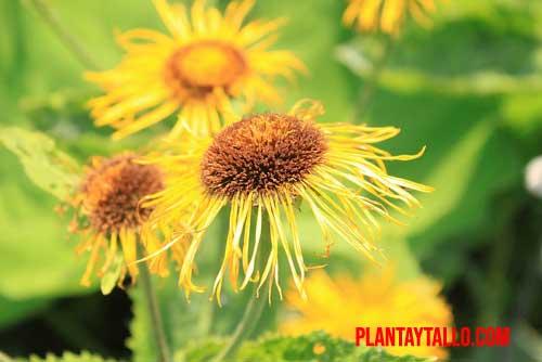 que son las plantas de ornato