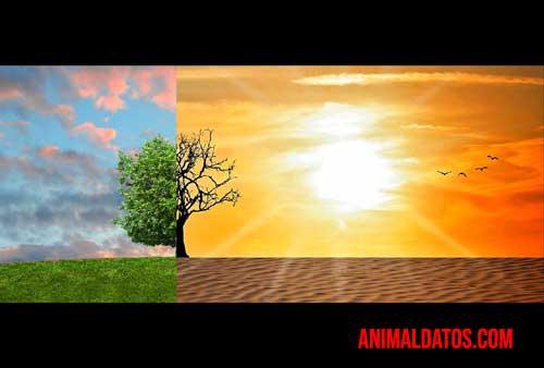 como afecta el cambio climático a la biodiversidad